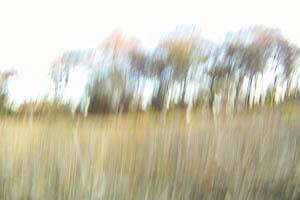 post-6136-128412063298_thumb.jpg